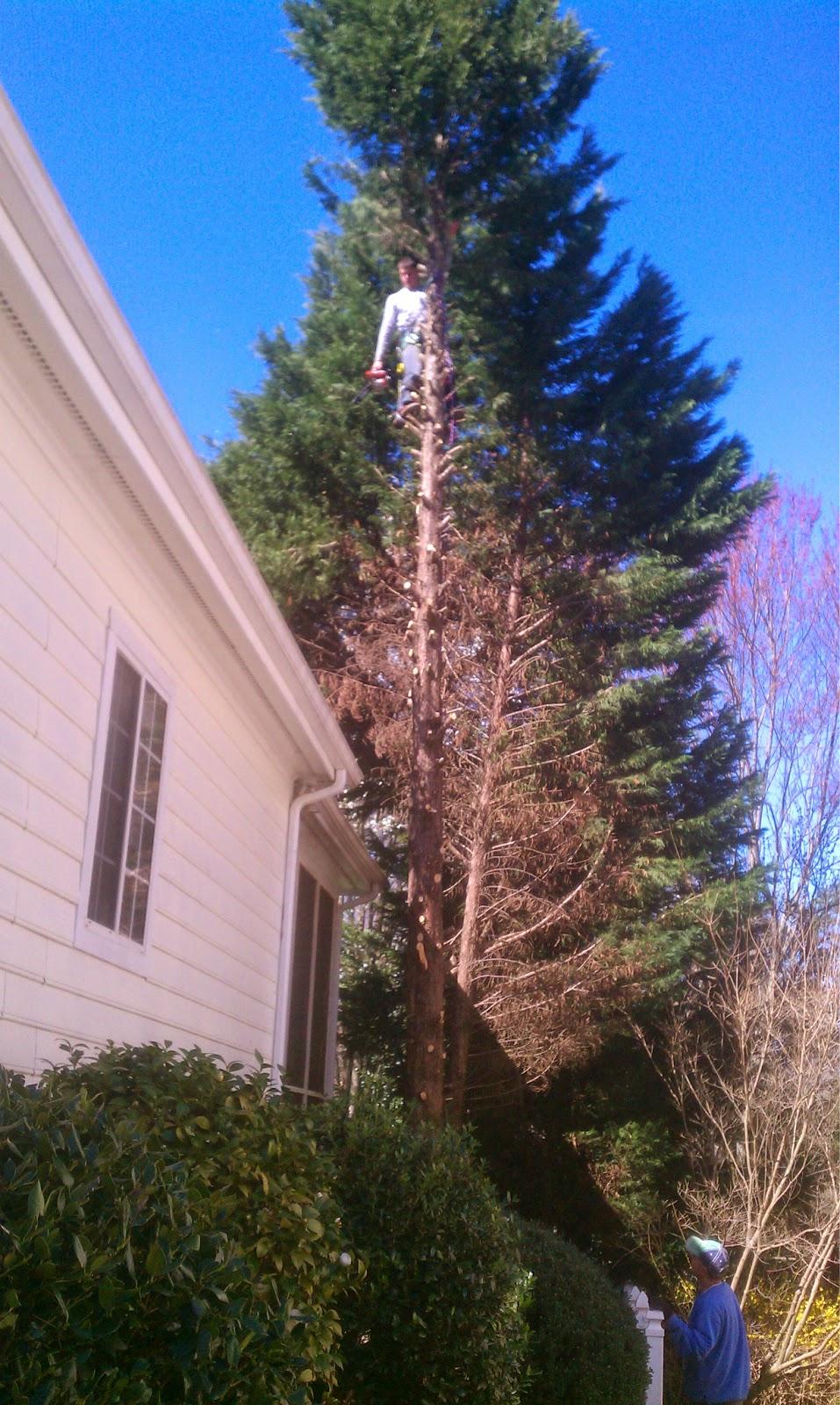 COMBS' TREE SERVICE