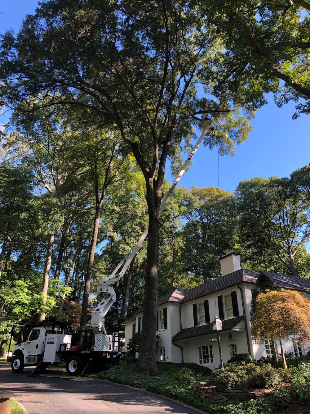 Dawson Tree Service