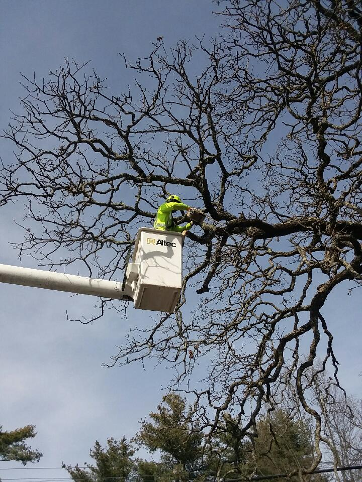 Frady Tree Care
