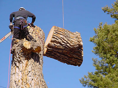 H & B Stump Removal & Tree Services