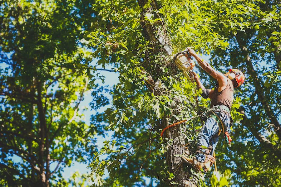 Lindbergh's Tree Service Greensboro