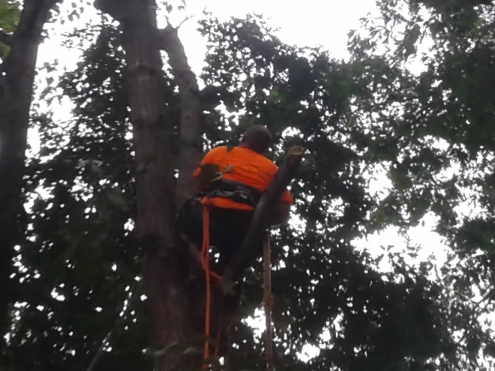 M&A Tree Care