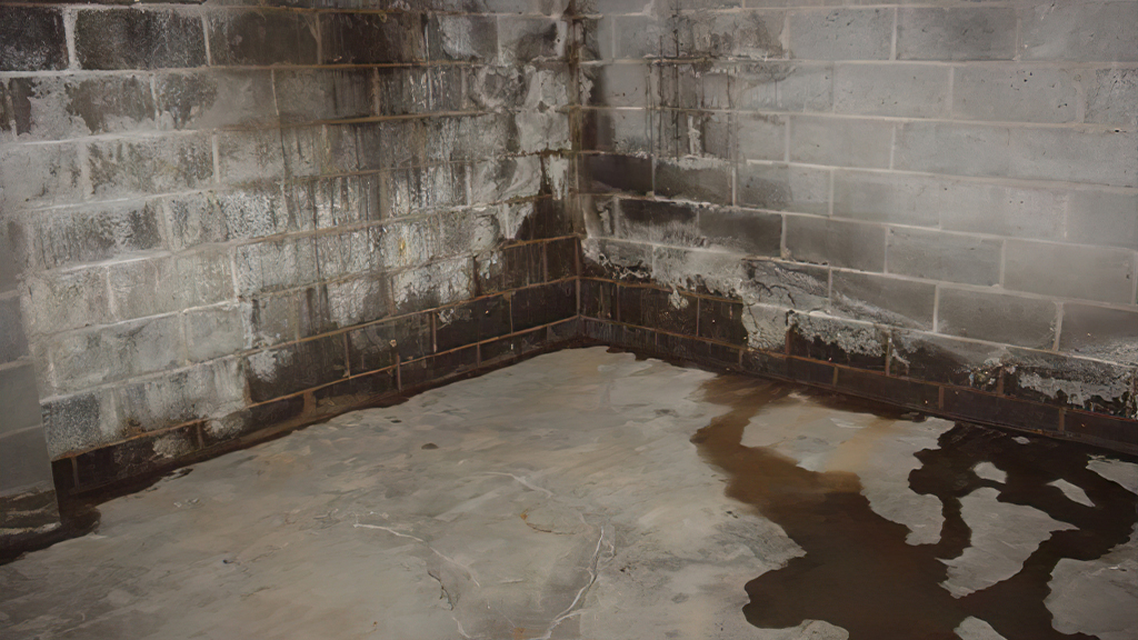 Pro Restoration Basement Waterproofing and Mold Remediation